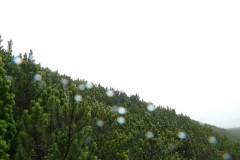 Gyalogtúrák :: Magas-Tátra 2008. 2. nap